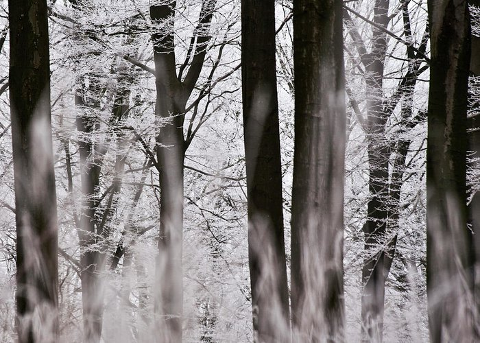 Heiko Greeting Card featuring the photograph Winter Forest 1 by Heiko Koehrer-Wagner