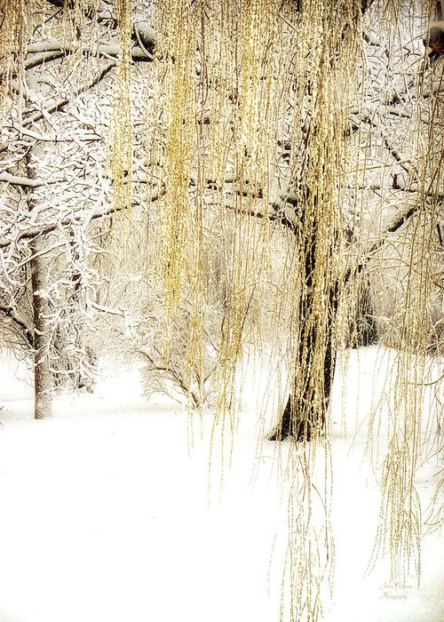 Winter Scene Greeting Card featuring the photograph Winter Gold by Julie Palencia