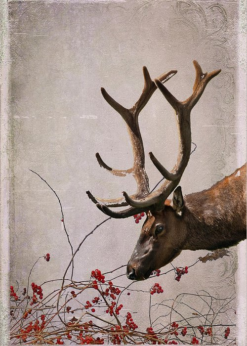Elk Greeting Card featuring the photograph Winter King by Julie Magers Soulen
