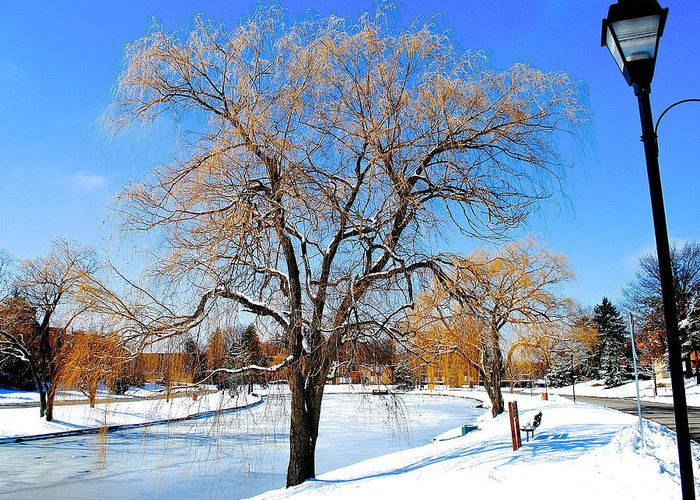 Willow Greeting Card featuring the photograph Winter Willow by Frozen in Time Fine Art Photography