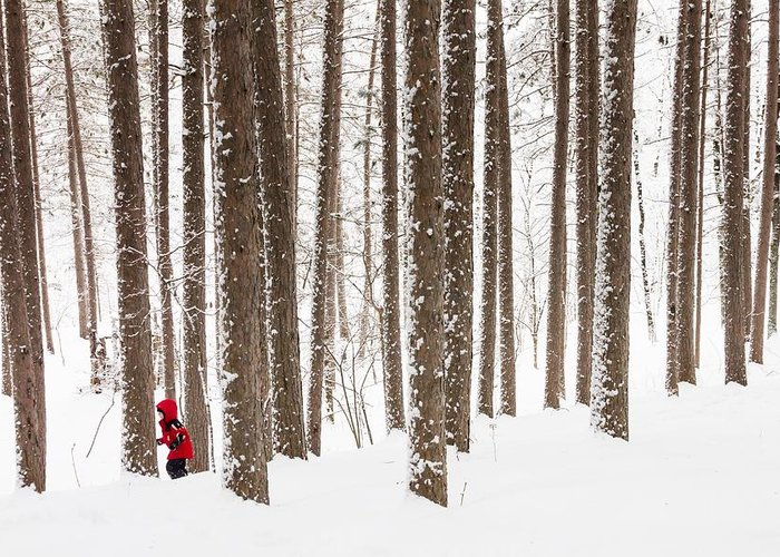 north Woods Snow snowy Woods winter Woods duluth lake Superior Winter fresh Snow greeting Cards amity Woods lester Park child In Landscape childhood Wonder winter Wonderland Greeting Card featuring the photograph Winter Frolic by Mary Amerman
