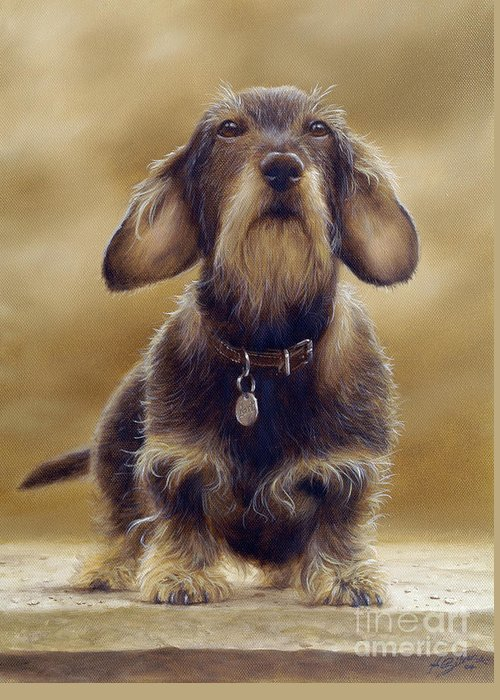 Dog Paintings Greeting Card featuring the painting Wire Haired Dachshund by John Silver