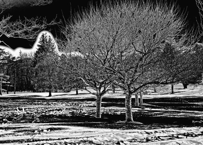 Winter Greeting Card featuring the photograph Without You by Madeline Ellis