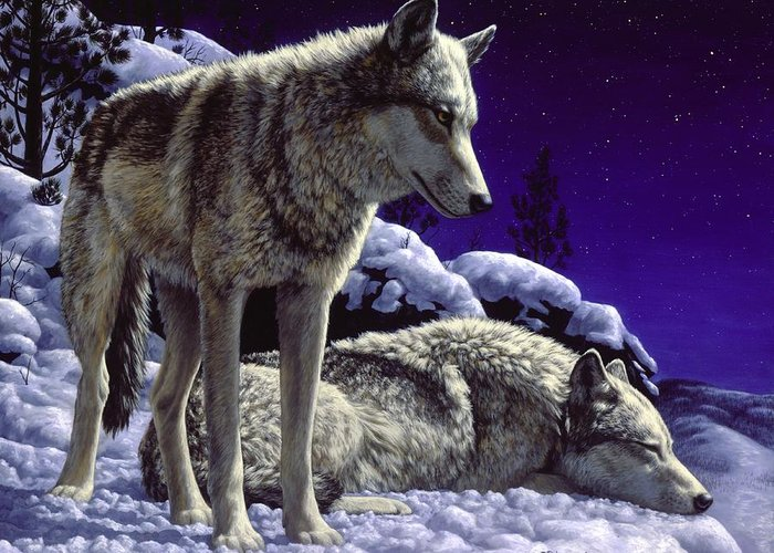 Wolf Greeting Card featuring the painting Wolf Painting - Night Watch by Crista Forest