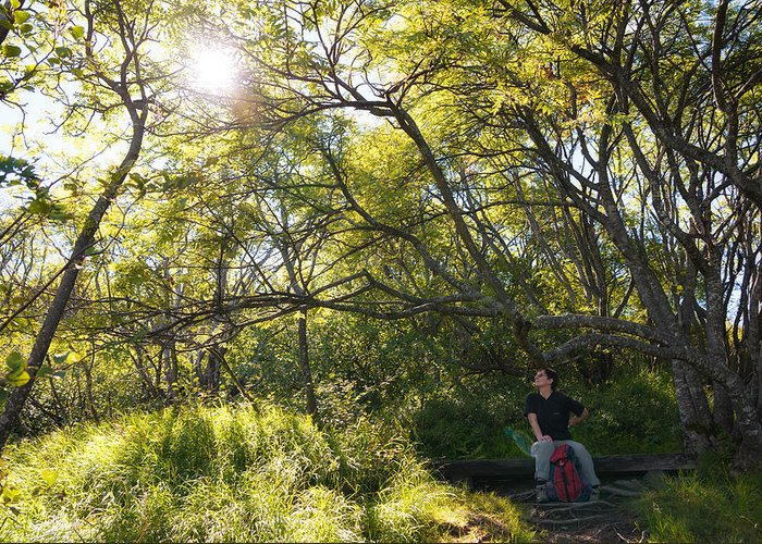 Sun Greeting Card featuring the photograph Woman Sitting On Bench - Bright Green Trees Sun Is Shining by Matthias Hauser