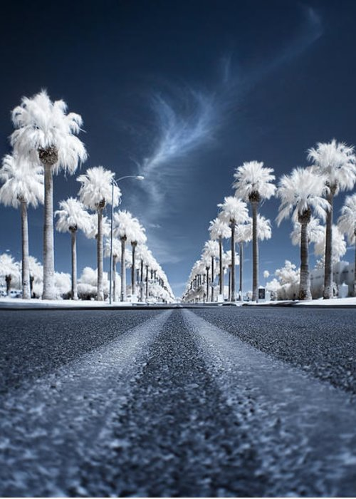 Infrared Greeting Card featuring the photograph X by Sean Foster