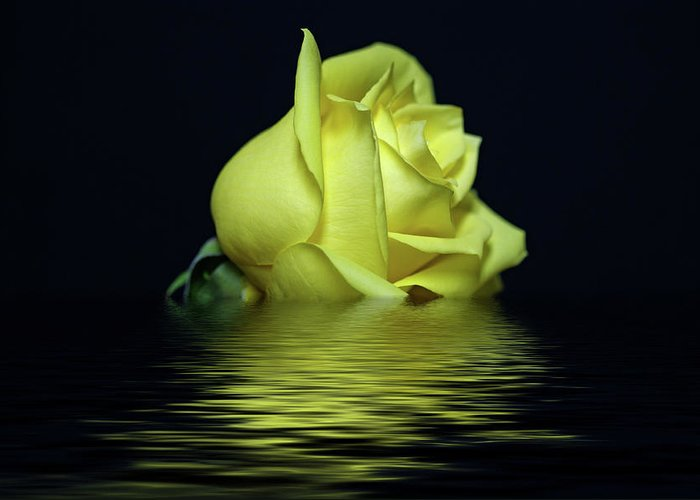 Yellow Rose Greeting Card featuring the photograph Yellow Rose II by Sandy Keeton