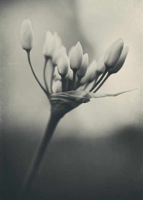 Flowers Greeting Card featuring the photograph You Will Always Be by Laurie Search