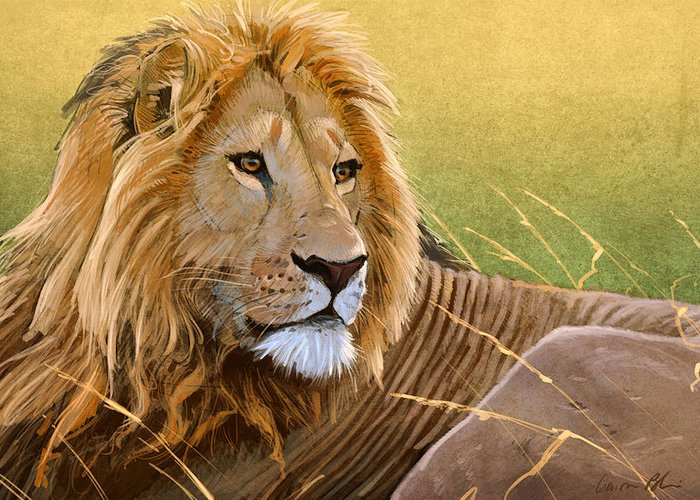 Lion Greeting Card featuring the digital art Young Lion by Aaron Blaise