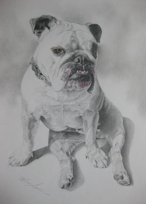 Dog Greeting Card featuring the drawing Zsu Zsi by Melanie Spencer