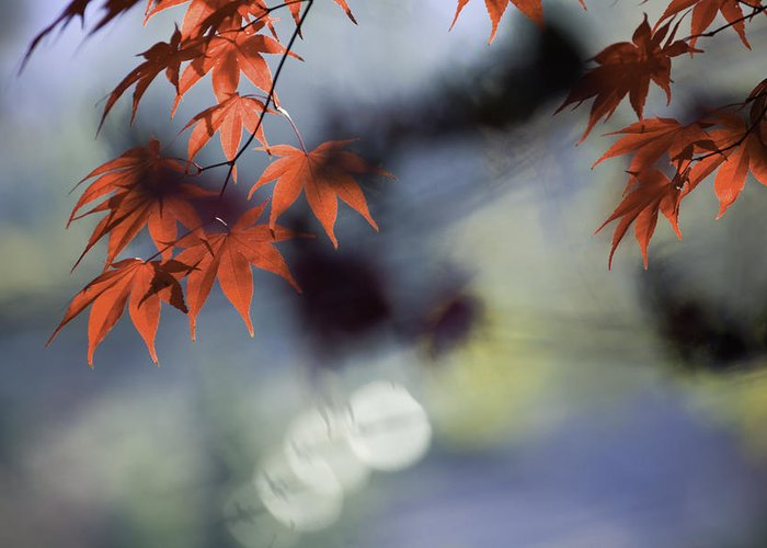 Autumn Greeting Card featuring the photograph Autumn Red by Rob Travis