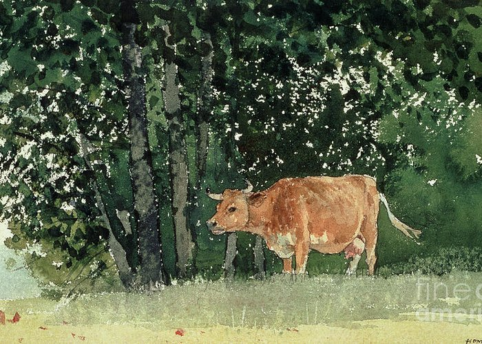 Cow In Pasture Greeting Card featuring the painting Cow In Pasture by Winslow Homer