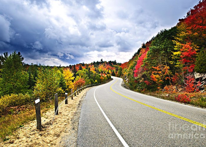 Road Greeting Card featuring the photograph Fall Highway by Elena Elisseeva