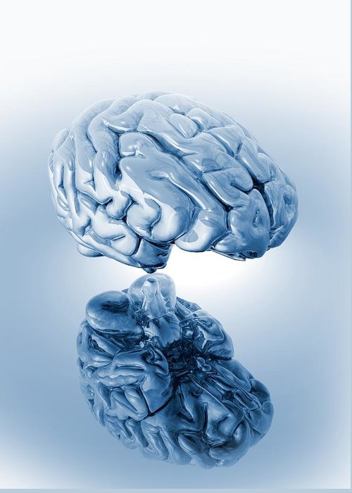 Artwork Greeting Card featuring the photograph Human Brain, Artwork by Victor Habbick Visions
