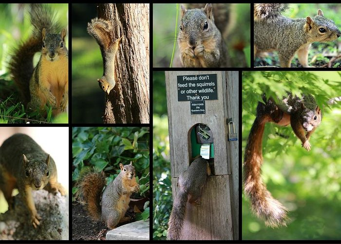 Squirrel Greeting Card featuring the photograph Please Don't Feed The Squirrels by Elizabeth Hart