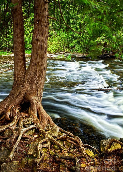 Trunk Greeting Card featuring the photograph River Through Woods by Elena Elisseeva