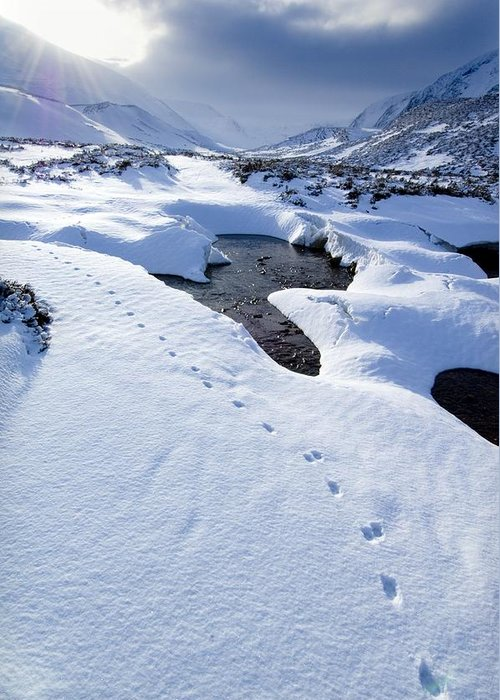 Countryside Greeting Card featuring the photograph Snowy Landscape, Scotland by Duncan Shaw