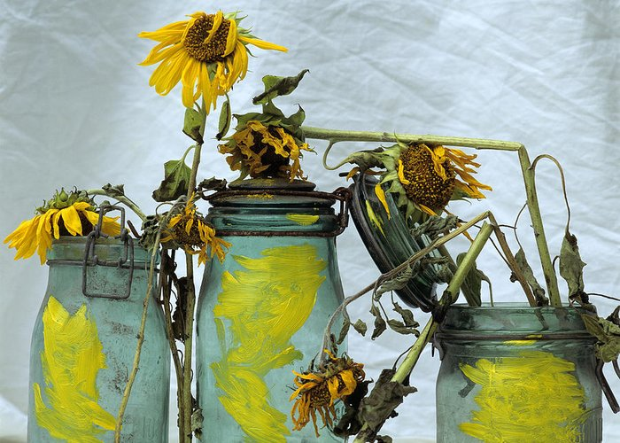 Yellow Greeting Card featuring the photograph Sunflowers .helianthus Annuus by Bernard Jaubert