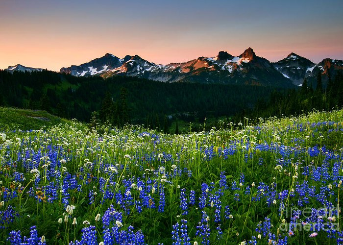 Tatoosh Range Greeting Card featuring the photograph Tatoosh Dawn by Mike Dawson