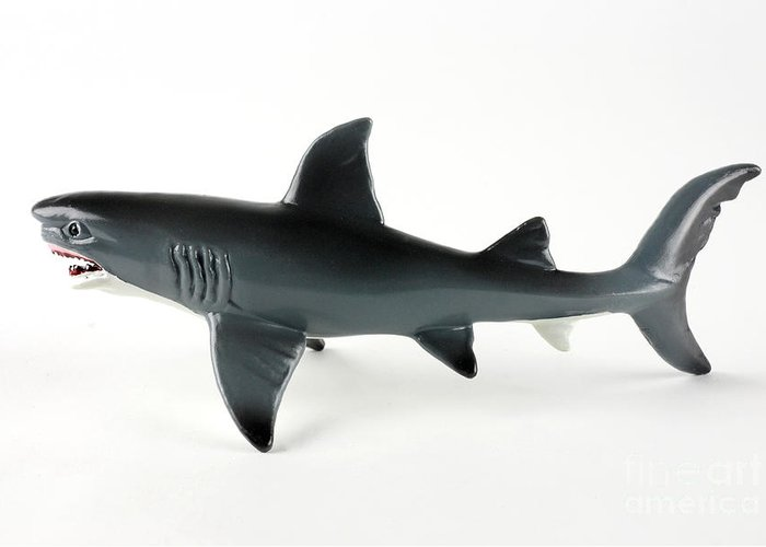 Toy Shark Greeting Card featuring the photograph Toy Shark by Photo Researchers, Inc.