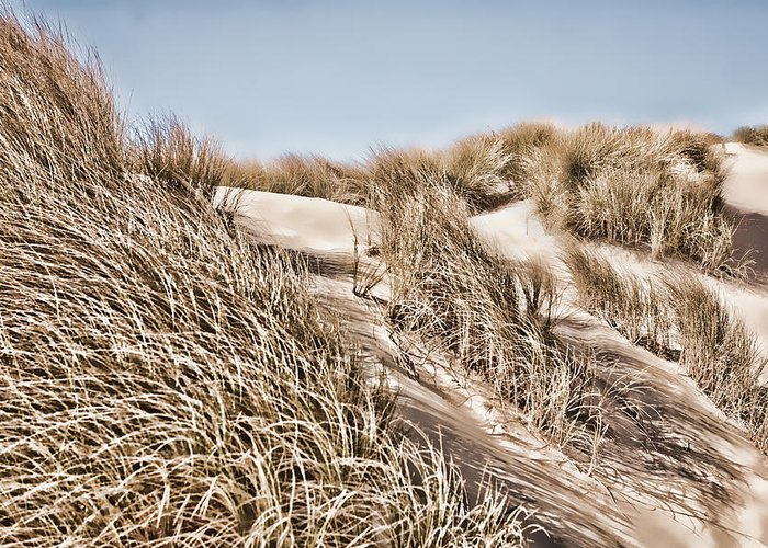 Dunegrass Greeting Card featuring the photograph Tranquility by Bonnie Bruno