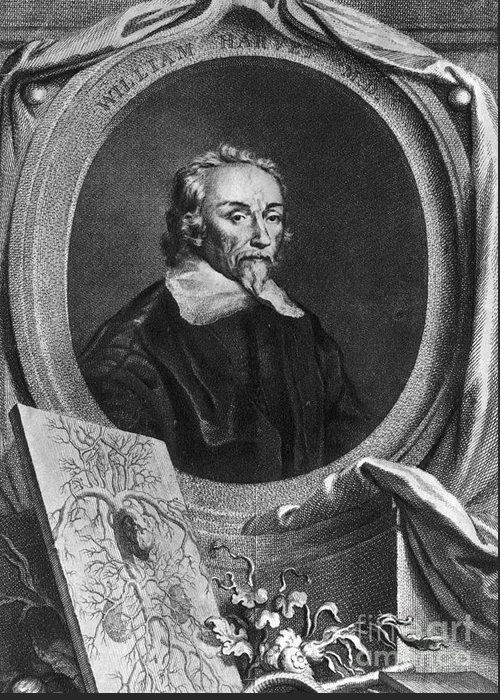 History Greeting Card featuring the photograph William Harvey, English Physician by Photo Researchers
