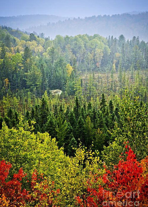 Autumn Greeting Card featuring the photograph Fall Forest Rain Storm by Elena Elisseeva