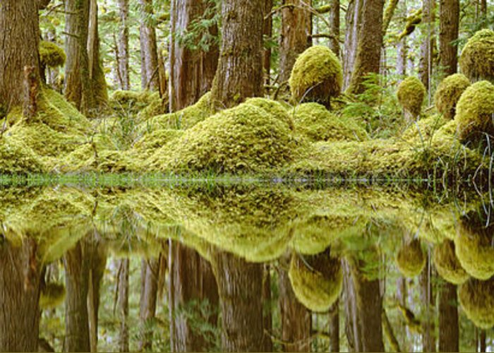 Aquatic Greeting Card featuring the photograph Swamp by David Nunuk