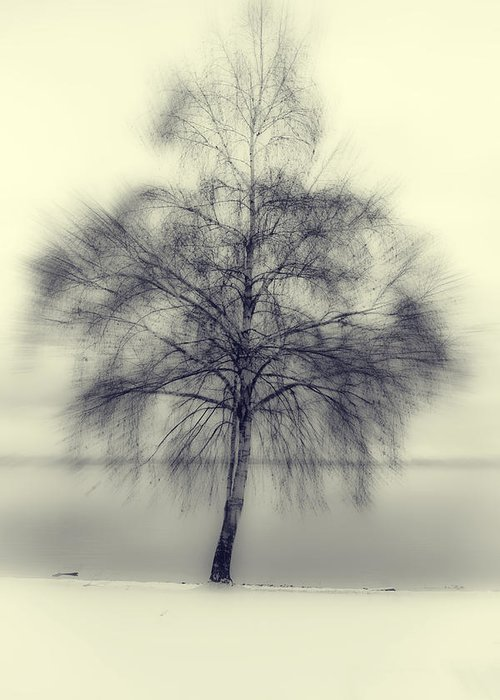 Tree Greeting Card featuring the photograph Winter Tree by Joana Kruse