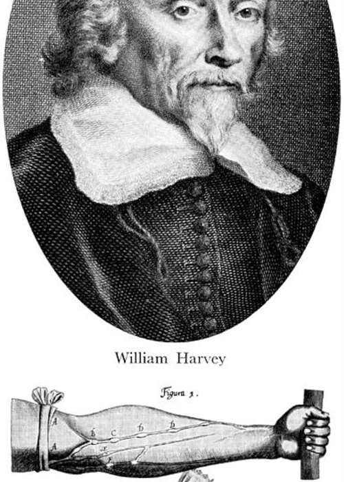 History Greeting Card featuring the photograph William Harvey, English Physician by Science Source