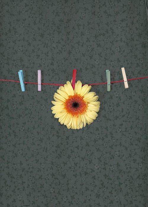 Gerbera Greeting Card featuring the photograph Gerbera by Joana Kruse