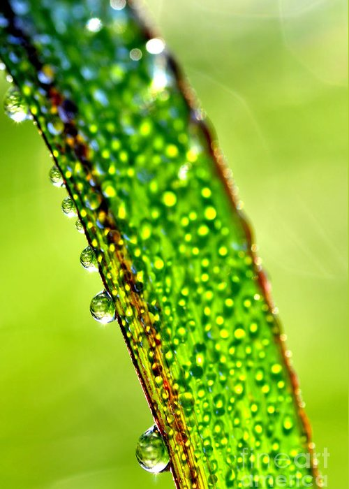 Dew Greeting Card featuring the photograph Dewdrops On Lemongrass by Thomas R Fletcher