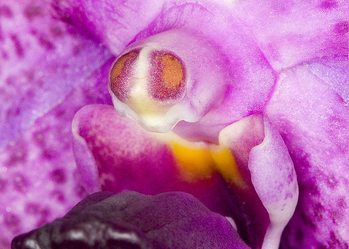 Ribet Greeting Card featuring the photograph Orchid Flower Bloom by C Ribet