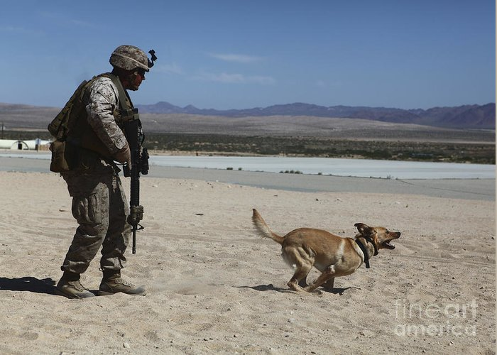 Enhanced Mojave Viper Greeting Card featuring the photograph A Dog Handler Conducts Improvised by Stocktrek Images