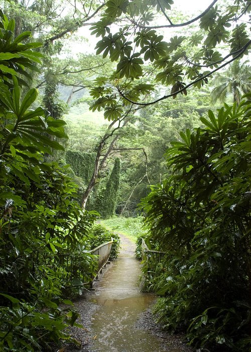 Manoa Falls Greeting Card featuring the photograph A Flooded Path At Manoa Falls by Stacy Gold