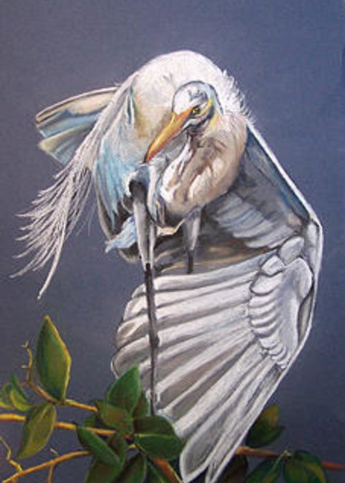 Bird Greeting Card featuring the painting A Preening Great Egret by Teresa Smith