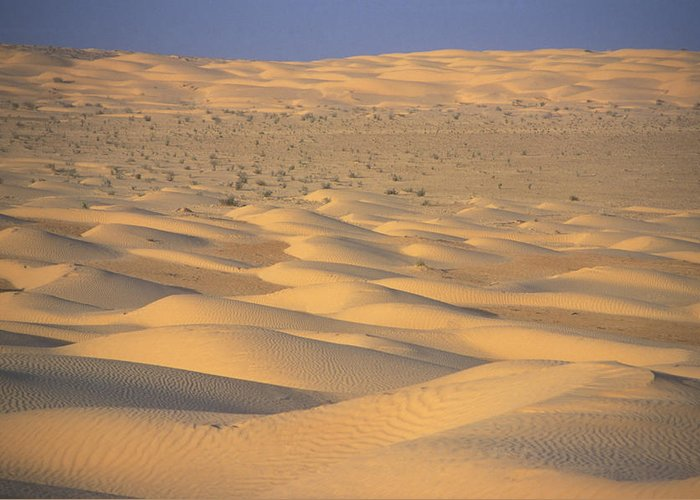 Outdoors Greeting Card featuring the photograph A Sea Of Dunes In The Sahara Desert by Stephen Sharnoff