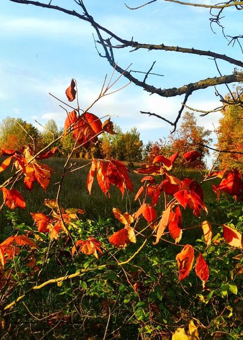 Autumn Greeting Card featuring the photograph A Splash Of Red II by Julie Dant