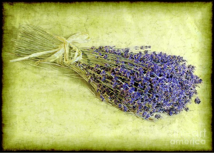Lavender Greeting Card featuring the photograph A Spray Of Lavender by Judi Bagwell