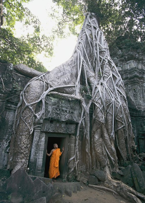 clergy Greeting Card featuring the photograph A Strangler Figs Gnarled Roots Creep by Paul Chesley