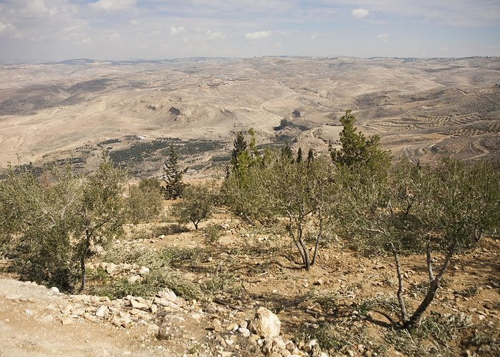 Mount Nebo Greeting Card featuring the photograph A View Of Olive Trees And Moses by Taylor S. Kennedy