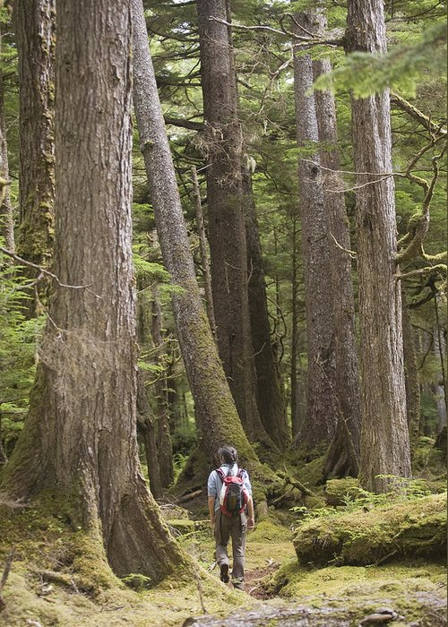 Queen Charlotte Islands Greeting Card featuring the photograph A Woman Walks In Old Growth Forest by Taylor S. Kennedy