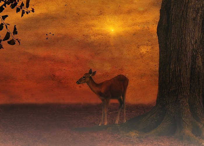 Animal Photography Greeting Card featuring the photograph A Young Deer by Tom York Images