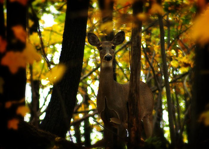 Hovind Greeting Card featuring the photograph Alert Doe by Scott Hovind