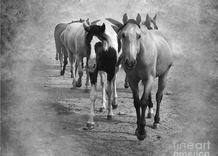 American Quarter Horse Greeting Card featuring the photograph American Quarter Horse Herd In Black And White by Betty LaRue
