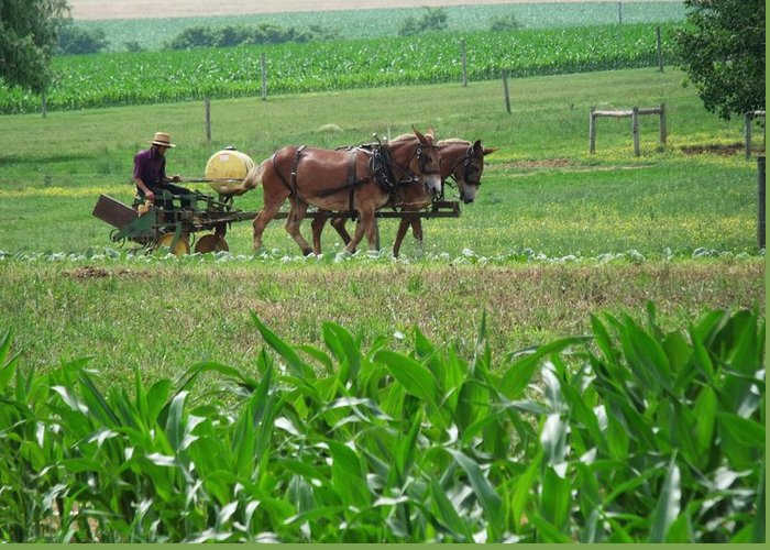 Amish Greeting Card featuring the photograph Amish At Work by Dottie Gillespie
