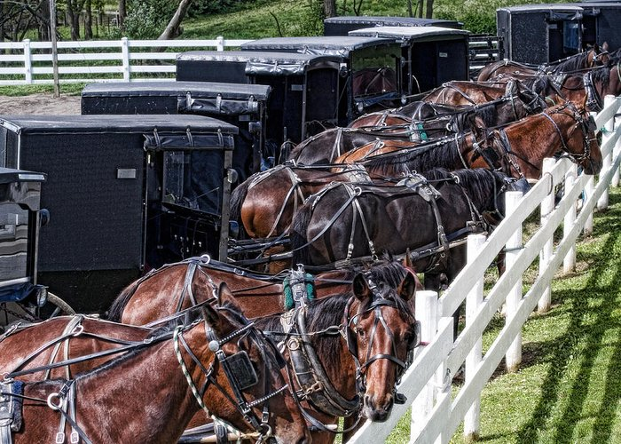 Horse Greeting Card featuring the photograph Amish Parking Lot by Tom Mc Nemar