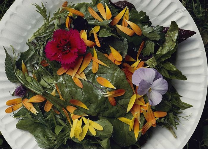 North America Greeting Card featuring the photograph An Edible Salad At The Tilth Harvest by Sam Abell