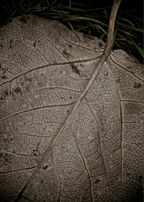 Leaf Greeting Card featuring the photograph Ancient Skin by Odd Jeppesen