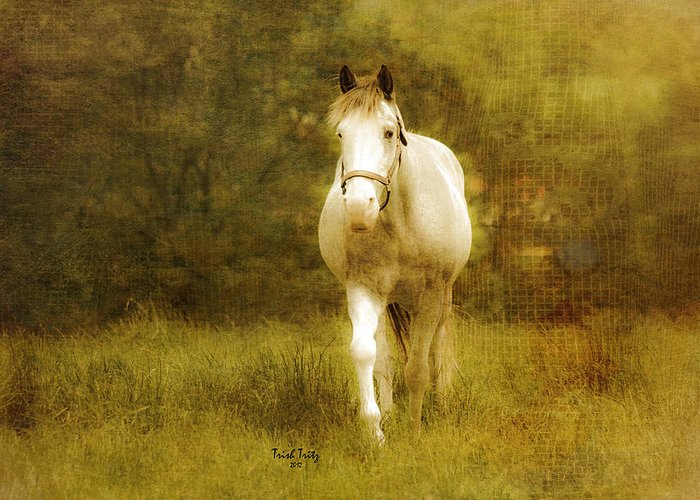 Horse Greeting Card featuring the photograph Andre On The Farm by Trish Tritz